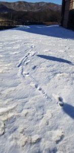 やっと見つけた雪国らしい景色
