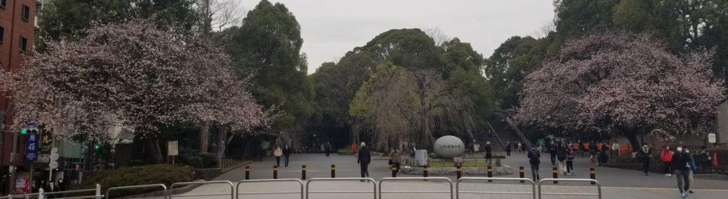 上野公園の早咲きの桜
